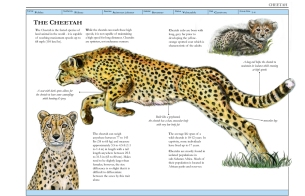 cheetah_mockup