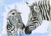 zebra_card