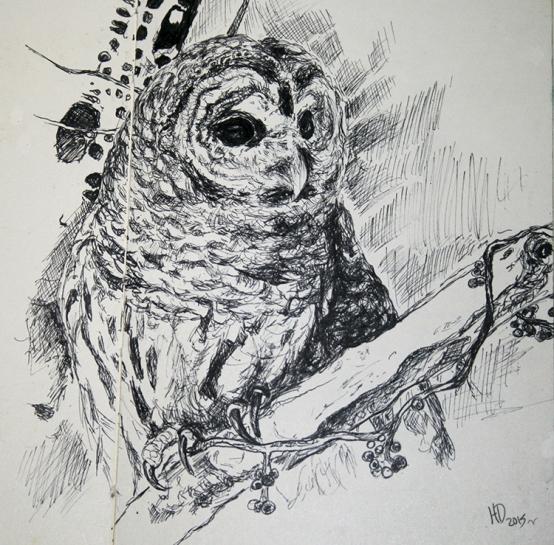 060915_owl_sm