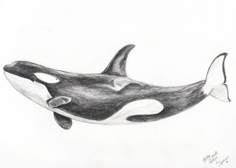Speck the orca.
